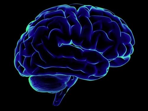 Красота и Здоровье: Мозг