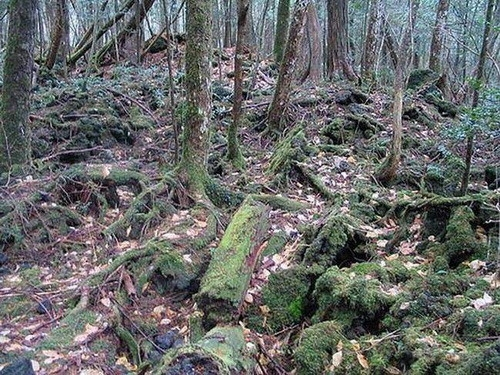 Наша планета: Лес самоубийц. Аокигахара.